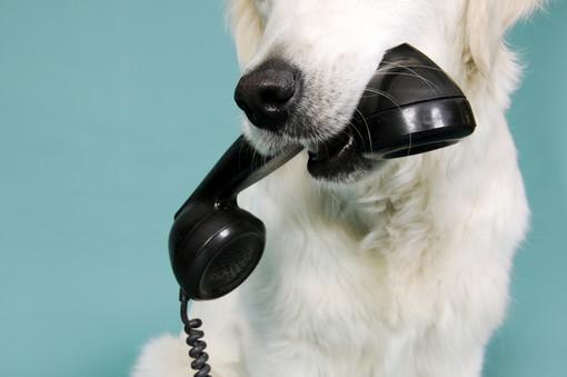 contact_us_kc_dog_groomer